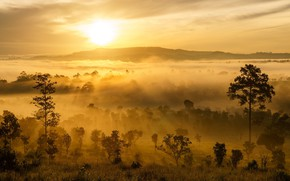Picture Fog, Panorama, Morning