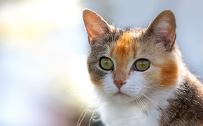 Picture cat, eyes, look, background