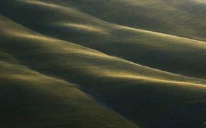 Picture greens, field, grass, nature, carpet