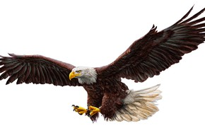 Wallpaper real, drawing, bald eagle, work of art