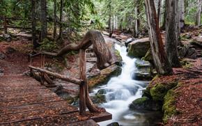 Picture Nature, Forest, Stream, The bridge