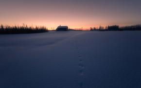Picture winter, field, night, trail