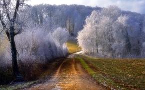 Wallpaper frost, road, trees