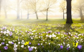 Picture flower, yellow, nature, butterfly, spring, crocuses, flowering