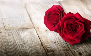 Picture flowers, flowers, red, petals, red, heart, love, roses, romantic, pair, petals, roses, love, heart