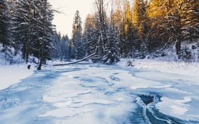 Wallpaper winter, ice, river, forest