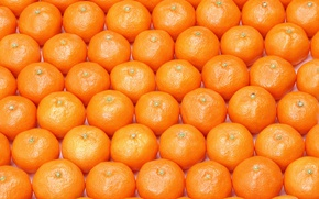 Picture Food, A lot, Texture, Tangerines, Citrus
