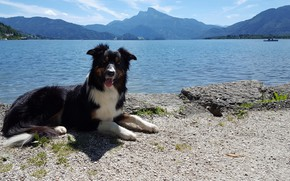 Picture the sun, landscape, mountains, lake, lies, on the shore, The border collie