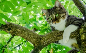 Wallpaper cat, cat, leaves, tree, foliage, on the tree