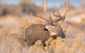 Picture autumn, nature, deer