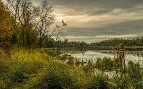 Wallpaper USA, forest, grass, the sky, Chisago, overcast, lake, birds, trees, Minnesota, clouds