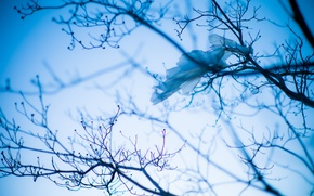 Picture the sky, branches, tree