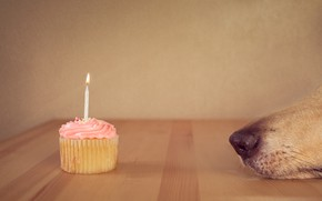 Picture house, dog, cake