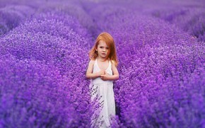 Picture field, flowers, dress, girl, lavender