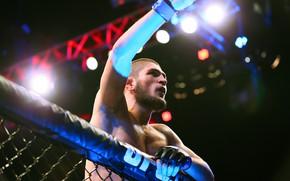 Wallpaper UFC, Khabib Nurmagomedov, MMA