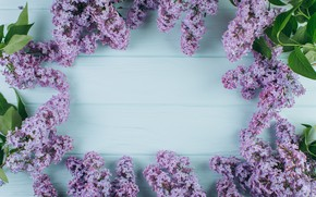 Picture flowers, branches, spring, flowering, wood, blossom, flowers, lilac, spring, violet, lilac