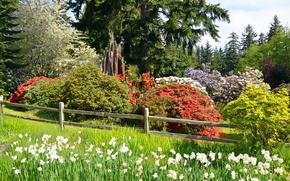 Picture greens, forest, summer, grass, the sun, trees, flowers, Park, the fence, the bushes, lawn, daffodils