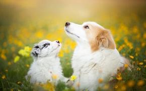 Wallpaper nature, dogs, summer