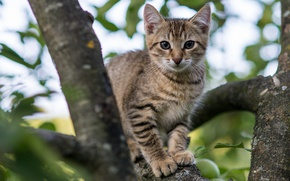 Picture cat, branches, tree, kitty