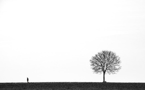 Picture background, tree, people