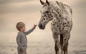 Wallpaper boy, background, horse