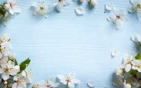Picture flowers, spring, Apple, wood, blue, blossom, flowers, spring