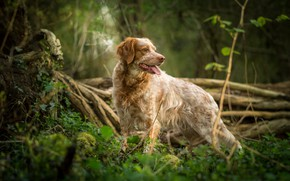 Picture grass, dog, breed, spotted