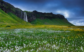 Wallpaper Iceland, rocks, flowers, grass, waterfall