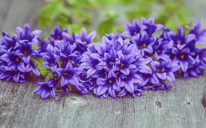 Picture flowers, background, purple, Board, bells, blurred, bouquets