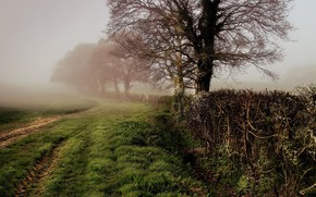 Picture Fog, Grass, Trees