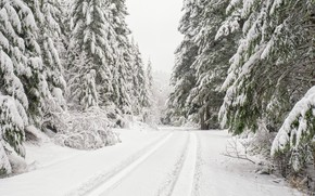 Picture winter, road, forest, snow, trees, ate, Washington, Washington, Olympic National Forest, National forest Olympic