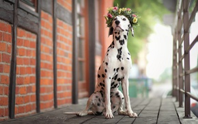 Picture house, dog, wreath