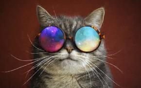 Wallpaper glasses, mustache, cat