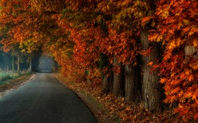 Wallpaper Park, fog, road, trees, leaves, alley, autumn, forest