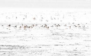 Picture sea, birds, nature, shore