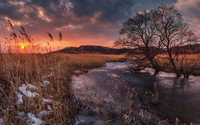 Picture sunset, river, tree, reed