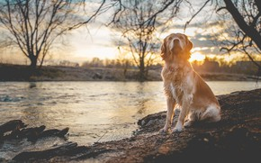 Picture sunset, river, dog