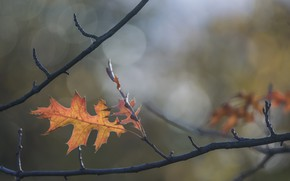 Picture autumn, sheet, branch