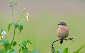Picture flowers, bird, branch, baby