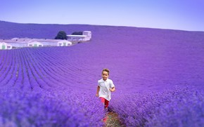 Picture field, flowers, nature, boy, lavender