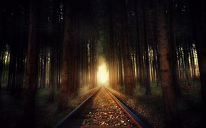 Wallpaper nature, forest, railroad