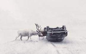 Wallpaper winter, road, machine, deer