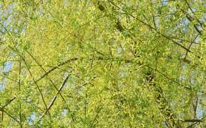 Picture tree, IVA, spring 2018, mamala ©