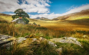 Picture landscape, mountains, tree, Wales, Snowdonia