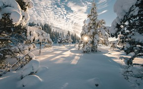 Picture clouds, the sky, the sun, Norway, ate, shadows, trees, nature, winter, snow, landscape, rays