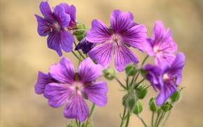 Picture macro, flowers, bokeh