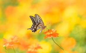 Picture flower, macro, nature, butterfly