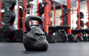 Wallpaper monkey, weight, gym