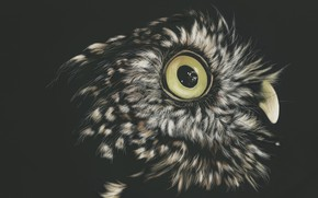 Picture the dark background, owl, by shonechacko