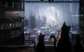 Wallpaper cats, night, the city, Mammia